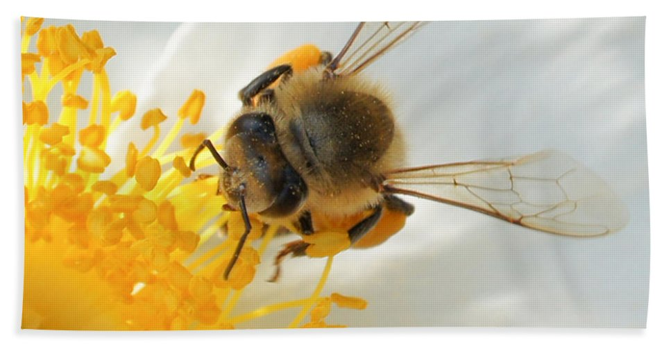 Bee Bath Sheet featuring the photograph Bee-u-tiful Squared by TK Goforth