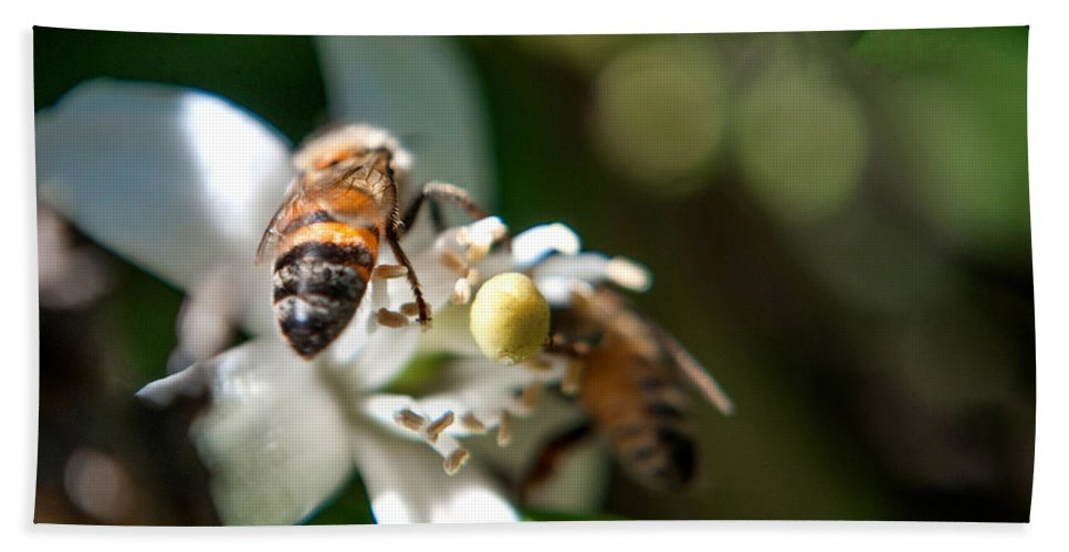 Bee Bath Sheet featuring the photograph Bee's by Anna Burdette