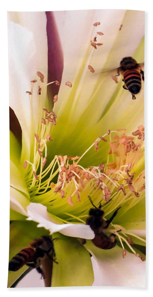 Cactus Hand Towel featuring the photograph Bees In Blossom by Zina Stromberg
