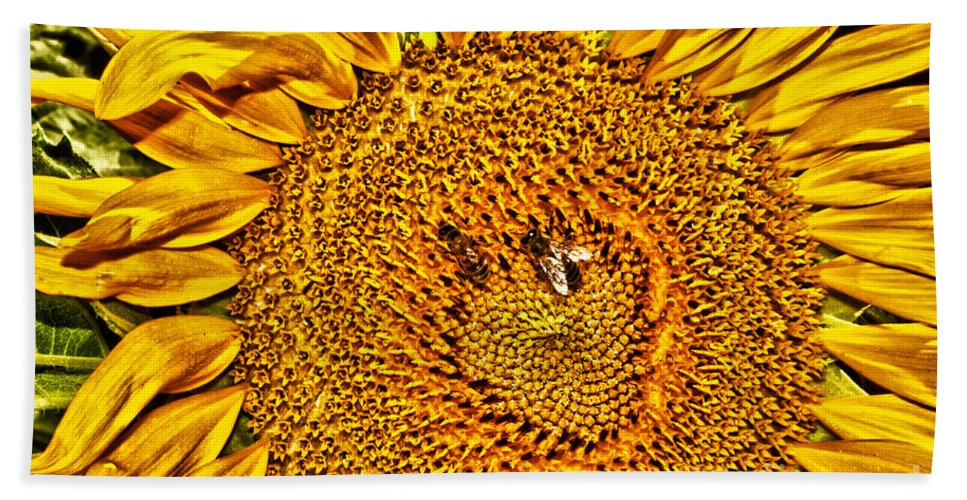 Flower Hand Towel featuring the photograph Bees On Sunflower Hdr by Robert Frederick