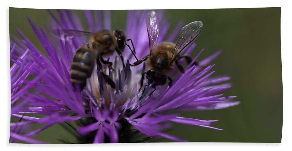 Worker Bee Bath Towel featuring the photograph Bees Suck In A Purple Flower In Los by Chico Sanchez