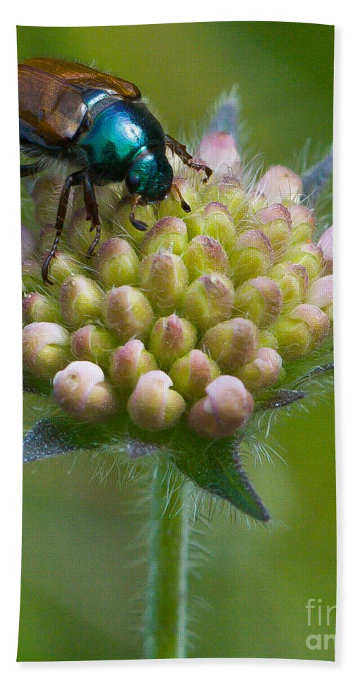 Animal Hand Towel featuring the photograph Beetle Sitting On Flower by John Wadleigh