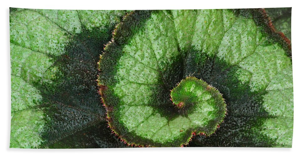 Begonia Bath Towel featuring the photograph Begonia Leaf 2 by Dave Mills