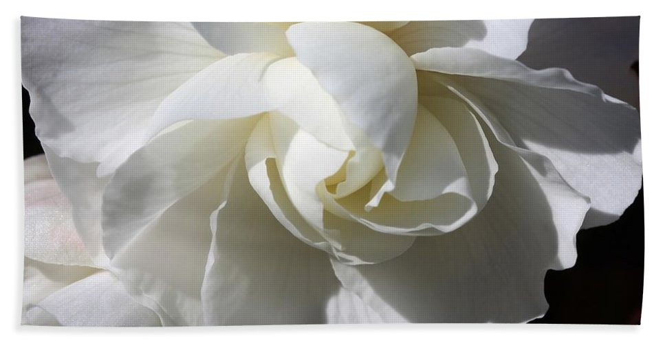 Begonia Hand Towel featuring the photograph Begonia Named Nonstop Apple Blossom by J McCombie
