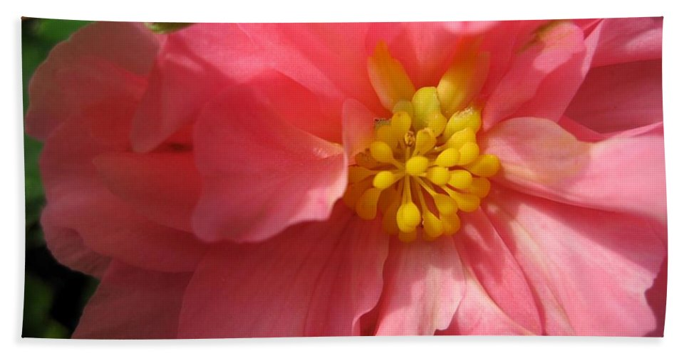 Begonia Bath Sheet featuring the photograph Begonia Named Nonstop Pink by J McCombie