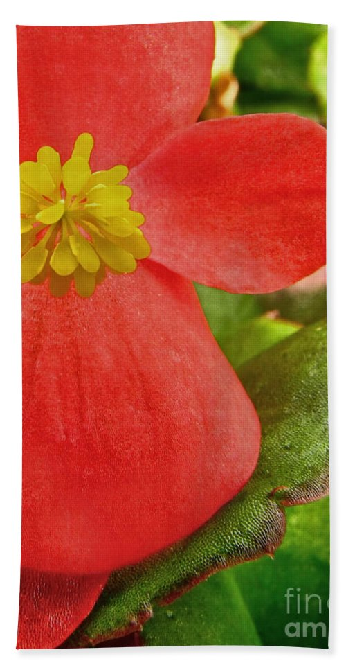 Nature Hand Towel featuring the photograph Begonia Volumia by Debbie Portwood