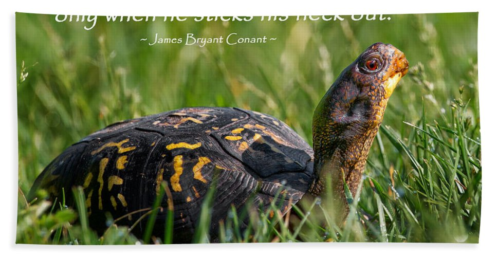 Turtle Hand Towel featuring the photograph Behold The Turtle by Bill Wakeley