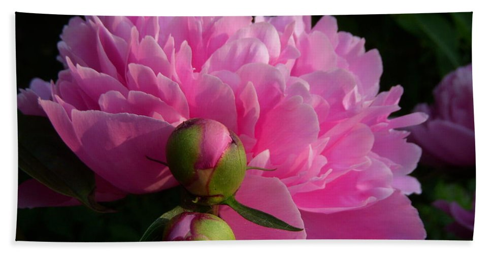 Peony Bath Sheet featuring the photograph Beloved by Terri Waselchuk