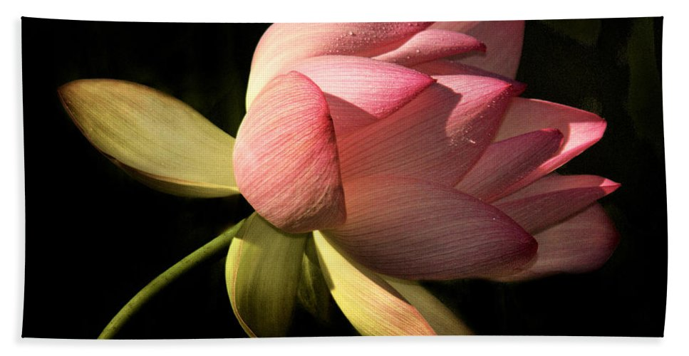 Pink Hand Towel featuring the photograph Bending In The Breeze by Sharon M Connolly