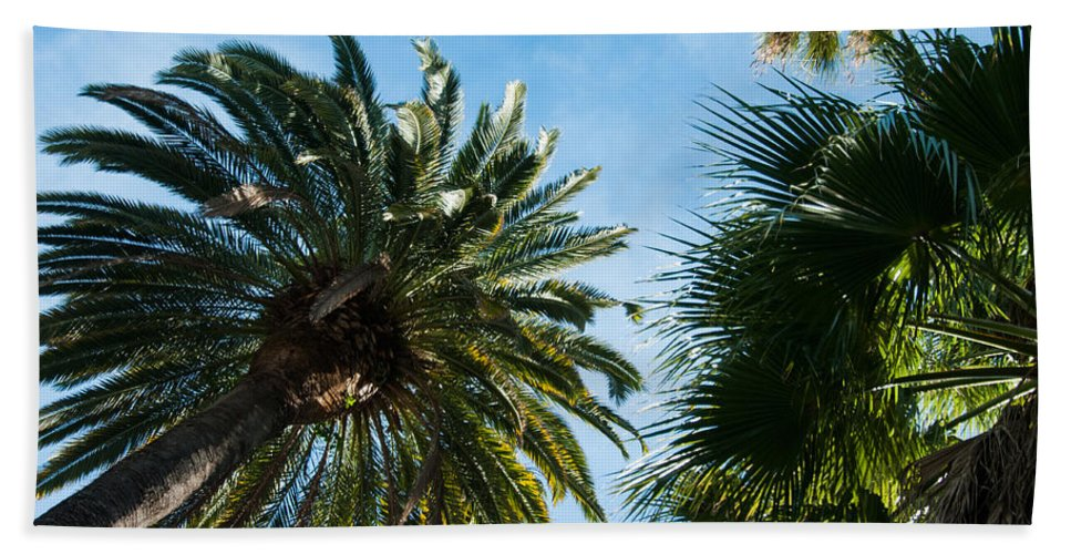 Beverly Hills Bath Sheet featuring the photograph Beverly Palms by Lee Roth