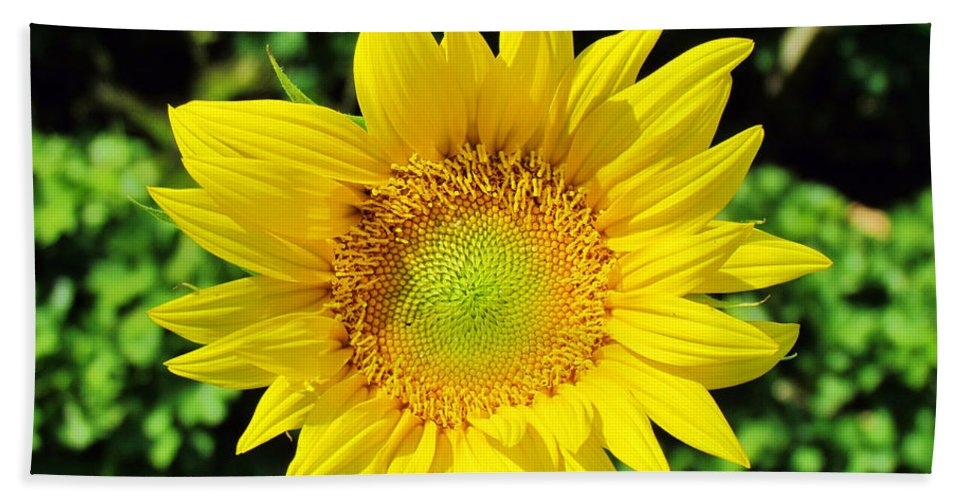 Sunflower Hand Towel featuring the photograph Big And Beautiful by Cynthia Guinn