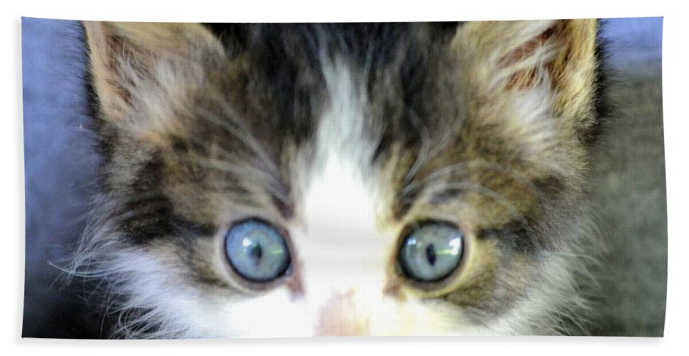 Big Blue Eyes Hand Towel featuring the photograph Big Blue Eyes by Maria Urso