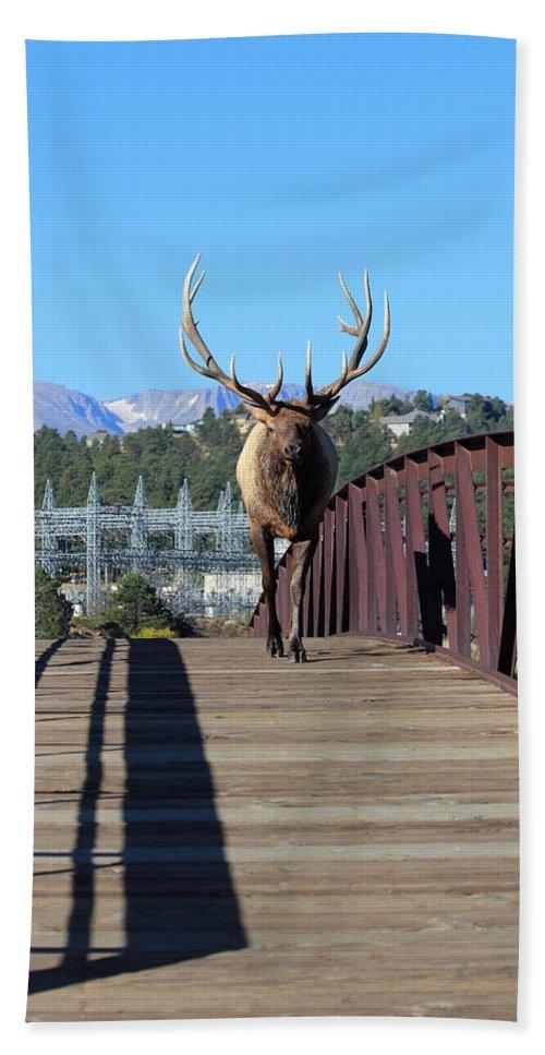 Elk Bath Sheet featuring the photograph Big Bull On The Bridge by Shane Bechler