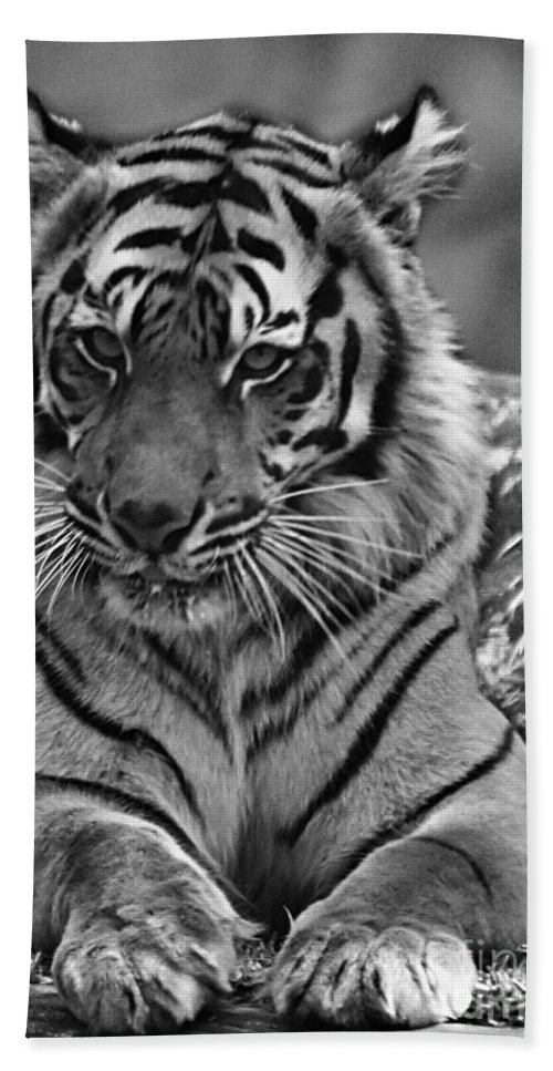 Tiger Hand Towel featuring the photograph Big Cats 10 by Ben Yassa