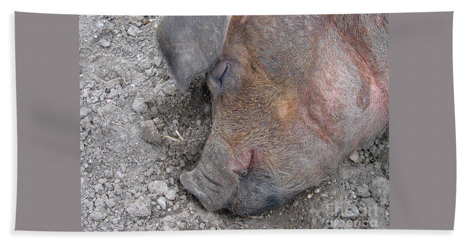 Pig Bath Towel featuring the photograph Big Dreamer by Ann Horn