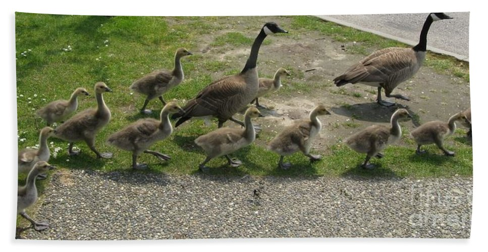 Goose Hand Towel featuring the photograph Big Family Crossing The Road by Lena Photo Art