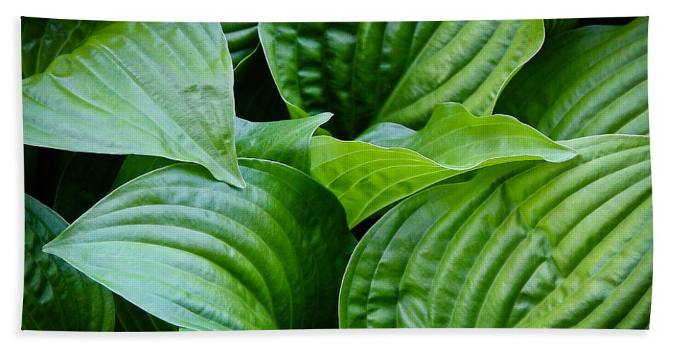 Leaves Hand Towel featuring the photograph Tropical Green Leaves by Athena Mckinzie