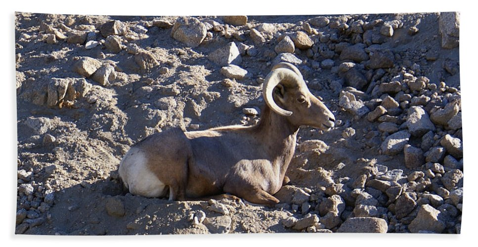 Barbara Snyder Hand Towel featuring the digital art Big Horn Sheep Close Up by Barbara Snyder