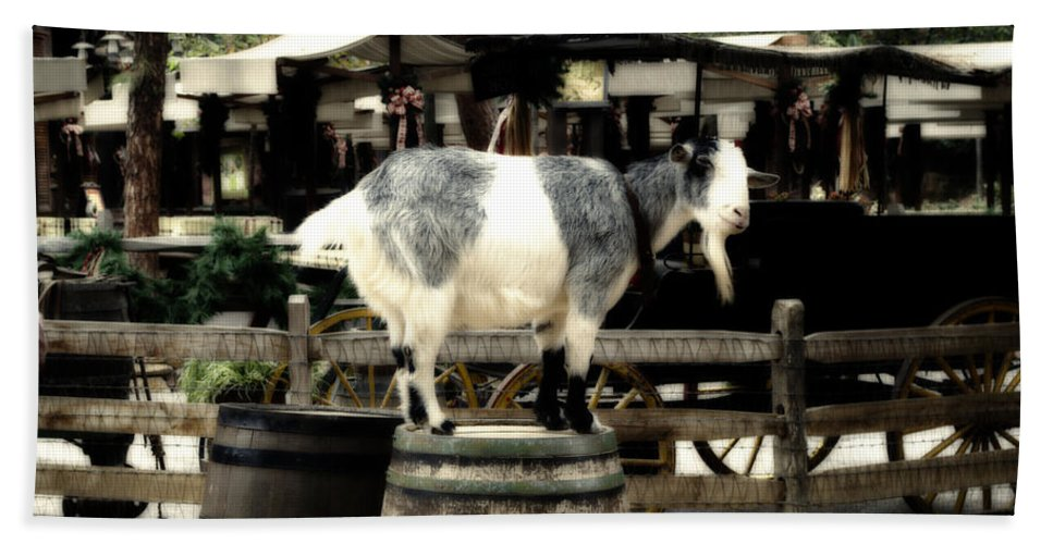 Disney Hand Towel featuring the photograph Billy Goat Big Thunder Ranch Frontierland Disneyland by Thomas Woolworth