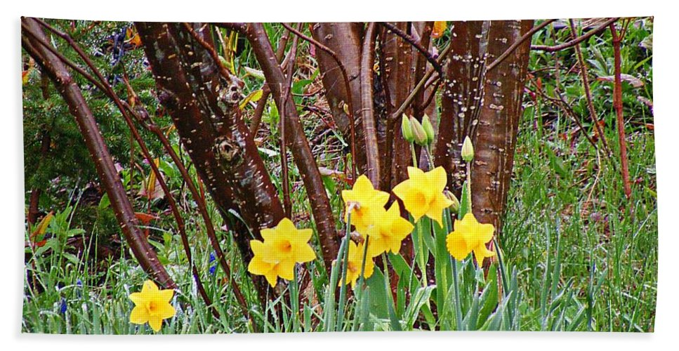 Birch And Daffodils Bath Sheet featuring the photograph Birch And Daffiodils by Barbara Griffin