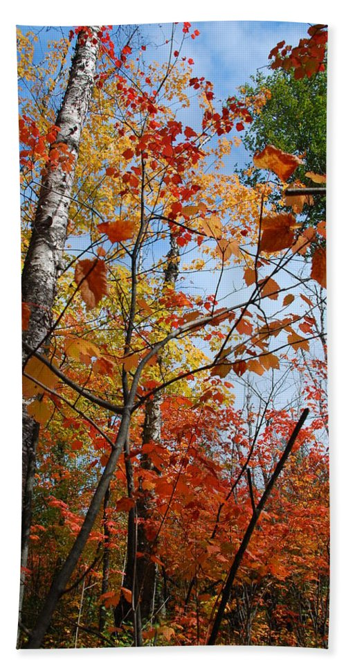 Autumn Bath Sheet featuring the photograph Birch Maple Autumn by Cascade Colors