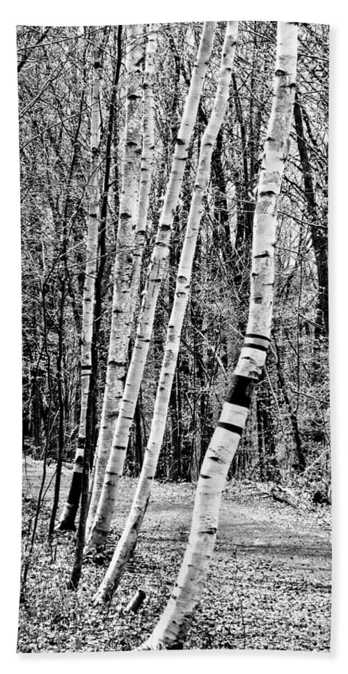 And Hand Towel featuring the photograph Birch Sentinels by Kristen Fox
