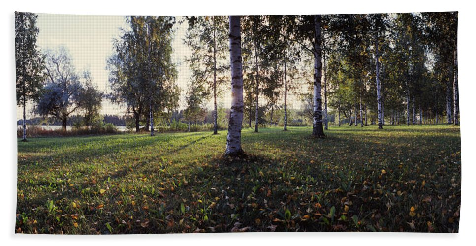 Photography Hand Towel featuring the photograph Birch Trees, Imatra, Finland by Panoramic Images