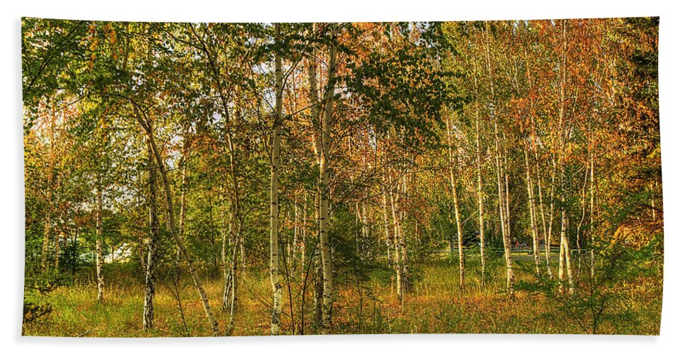 Art Hand Towel featuring the photograph Birch Trees2 by Svetlana Sewell