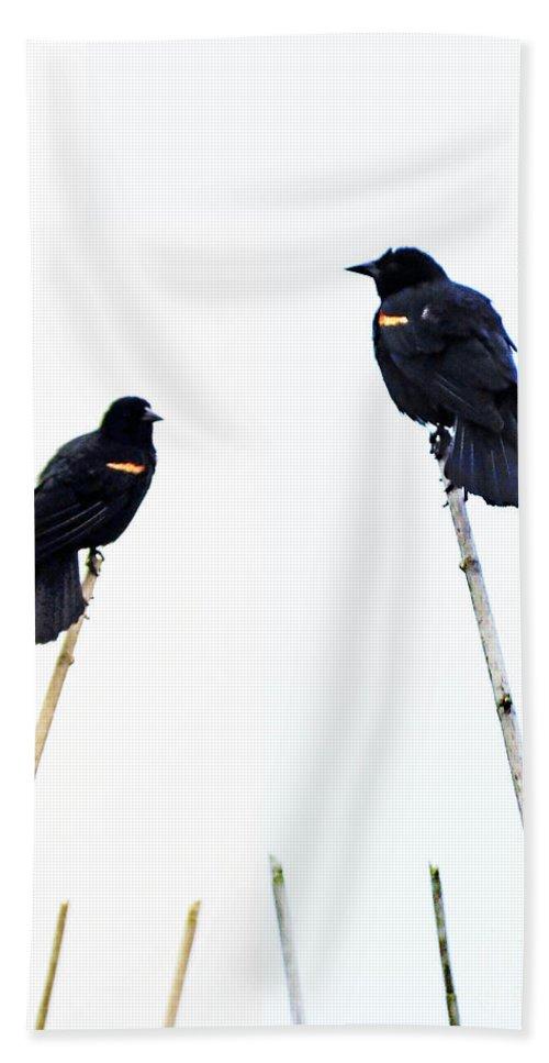 Redwing Hand Towel featuring the digital art Bird Art by Lizi Beard-Ward