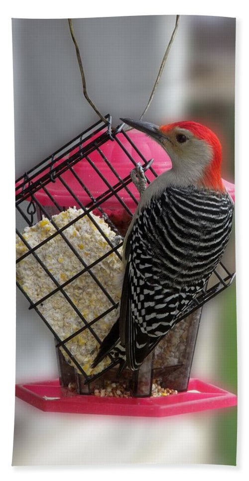 Animals Bath Sheet featuring the photograph Bird Feeder Wp 06 by Thomas Woolworth