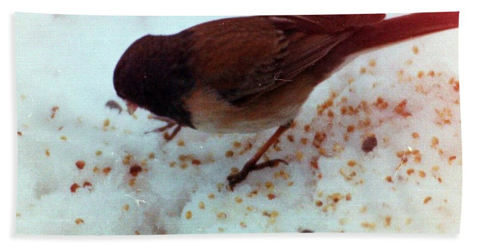 Birds Hand Towel featuring the photograph Bird In Snow 2 by Karl Rose