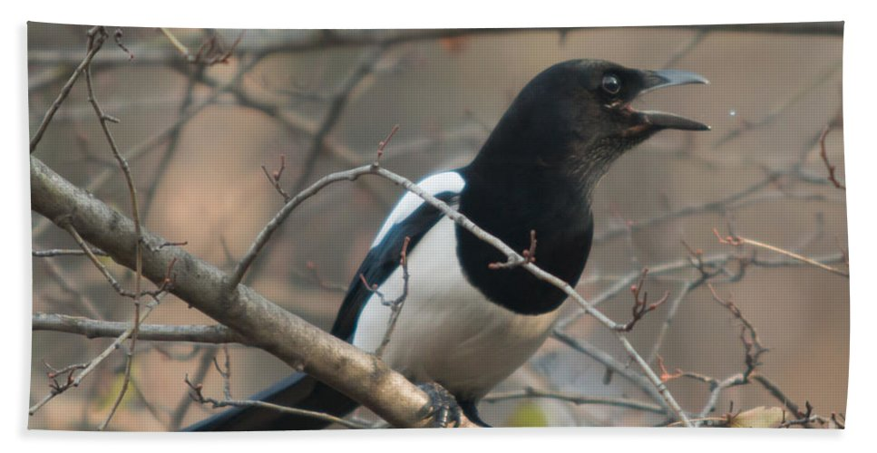 Birds Hand Towel featuring the photograph Bird Magpie by Jivko Nakev
