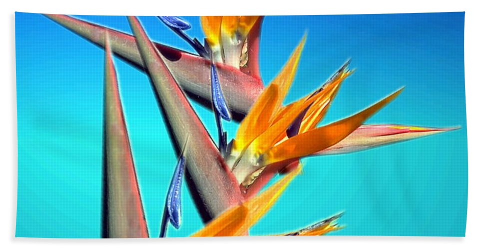 Floral Hand Towel featuring the photograph Bird Of Paradise 2013 by Joyce Dickens