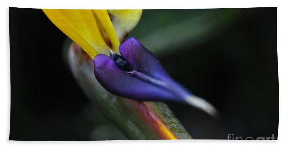 Flora Hand Towel featuring the photograph Bird Of Paradise by Cindy Manero