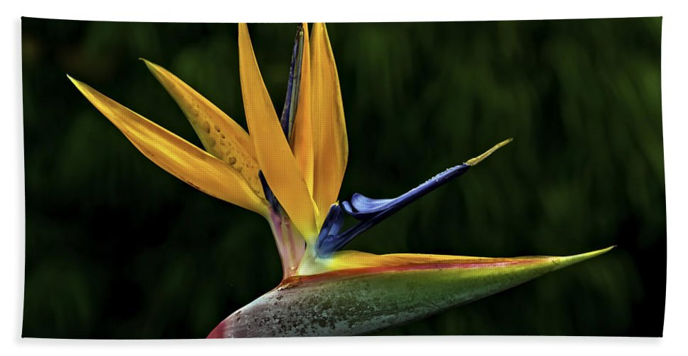 Flower Bath Sheet featuring the photograph Bird Of Paradise by Maria Coulson