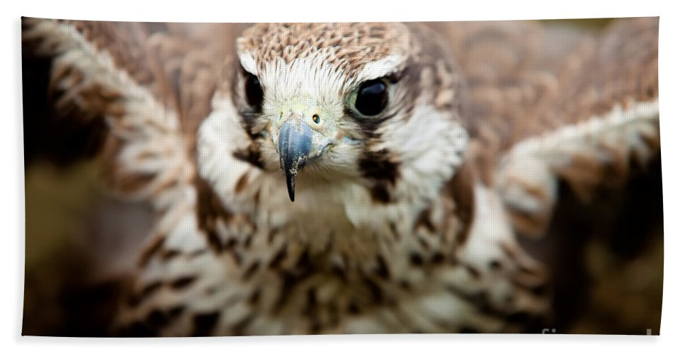 Bird Bath Sheet featuring the photograph Bird Of Prey Flying by Simon Bratt Photography LRPS