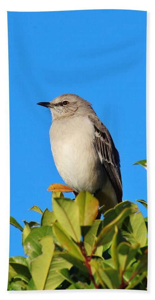 Bird Hand Towel featuring the photograph Bird On Tree Top by Cynthia Guinn