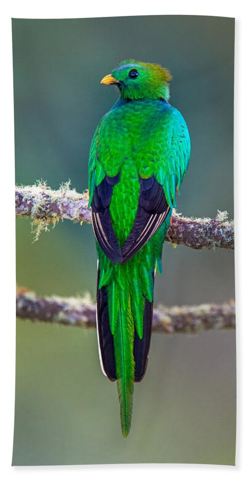 Photography Hand Towel featuring the photograph Bird Perching On A Branch, Savegre by Panoramic Images