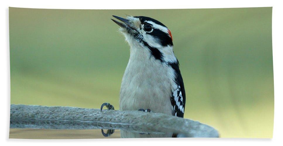 Woodpecker Hand Towel featuring the photograph Birdbath by Lori Tordsen