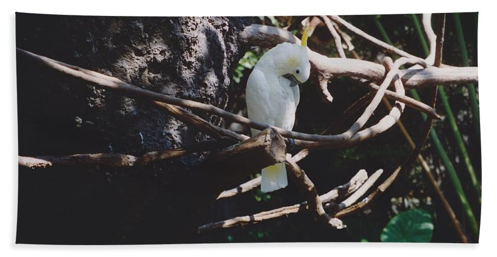 Nature Hand Towel featuring the photograph Birdie Sitting In The Tree by Michelle Powell
