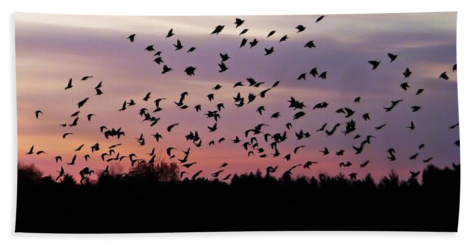 Birds Bath Sheet featuring the photograph Birds At Sunrise by Aimee L Maher ALM GALLERY
