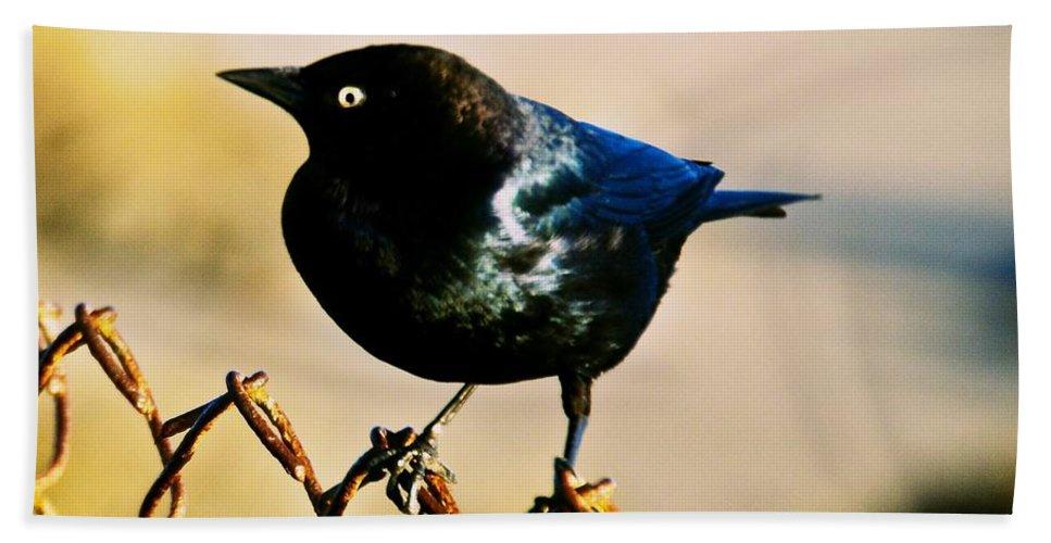 Bird Bath Sheet featuring the photograph Bird's Eye by Eric Tressler