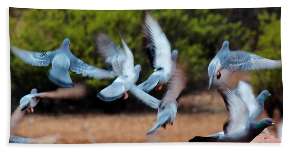 Wildlife Hand Towel featuring the photograph Birds In Flight 030515aa by Edward Dobosh