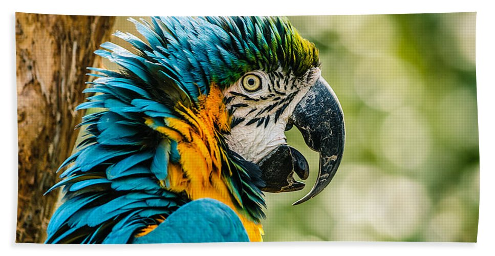 Blue-and-gold Macaw Bath Sheet featuring the photograph Birds Of A Feather by Chris Modlin