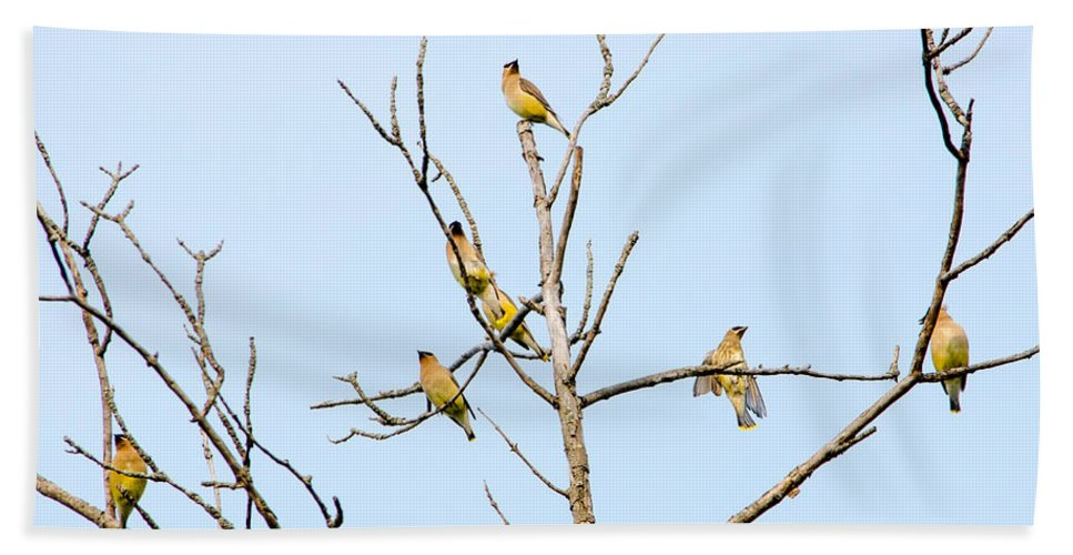 Waxwings Bath Sheet featuring the photograph Birds Of A Feather - Waxwings by Susan McMenamin