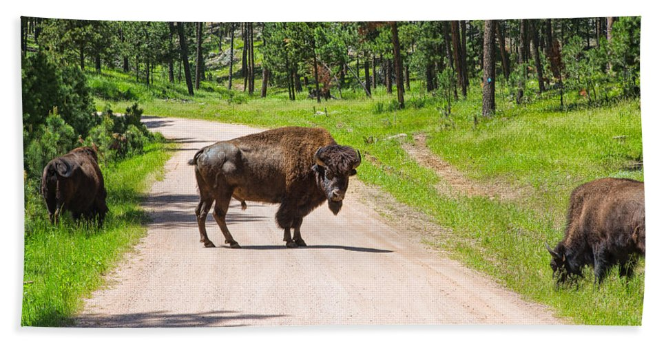 Landscape Hand Towel featuring the photograph Bison Blocking The Road by John M Bailey