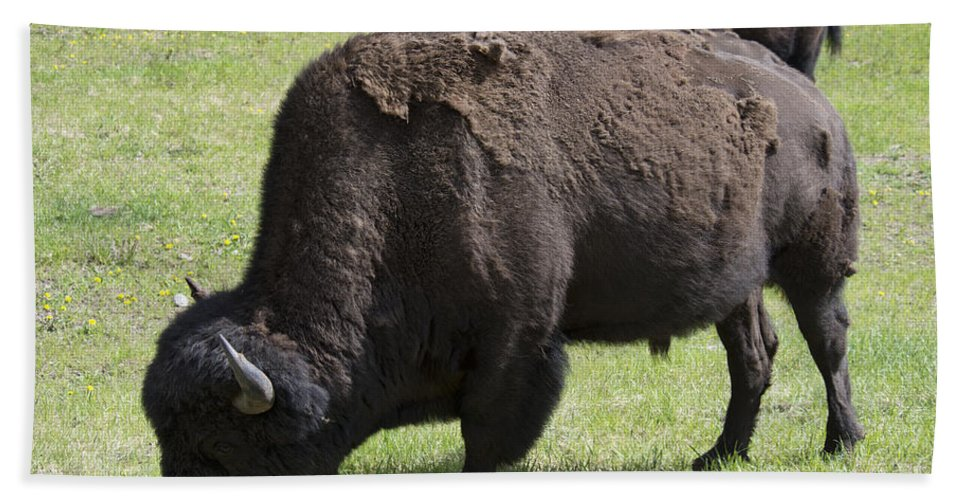 Wood Bison Hand Towel featuring the photograph Bison by David Arment