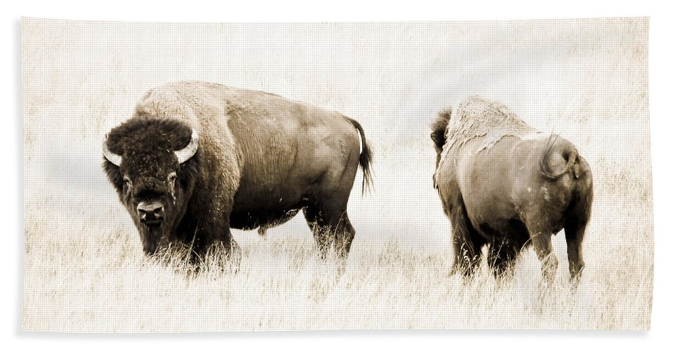 Bison Bath Sheet featuring the photograph Bison II by Athena Mckinzie