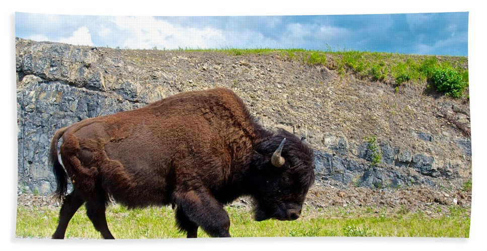 Bison Bath Sheet featuring the photograph Bison Plodding Along On Alaska Highway-bc-canada by Ruth Hager