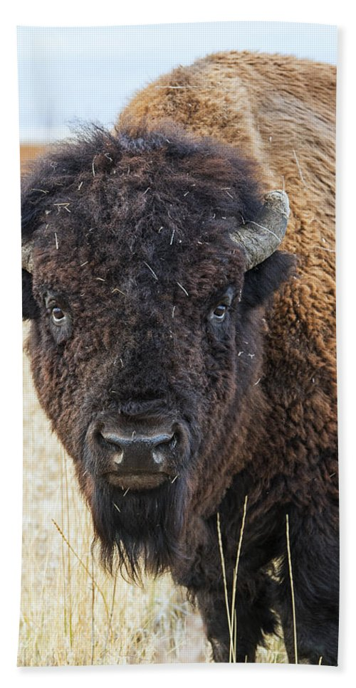Bison Hand Towel featuring the photograph Bison by Stacy White